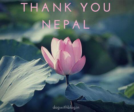 Nepal bans animal sacrifice Gadhimai festival