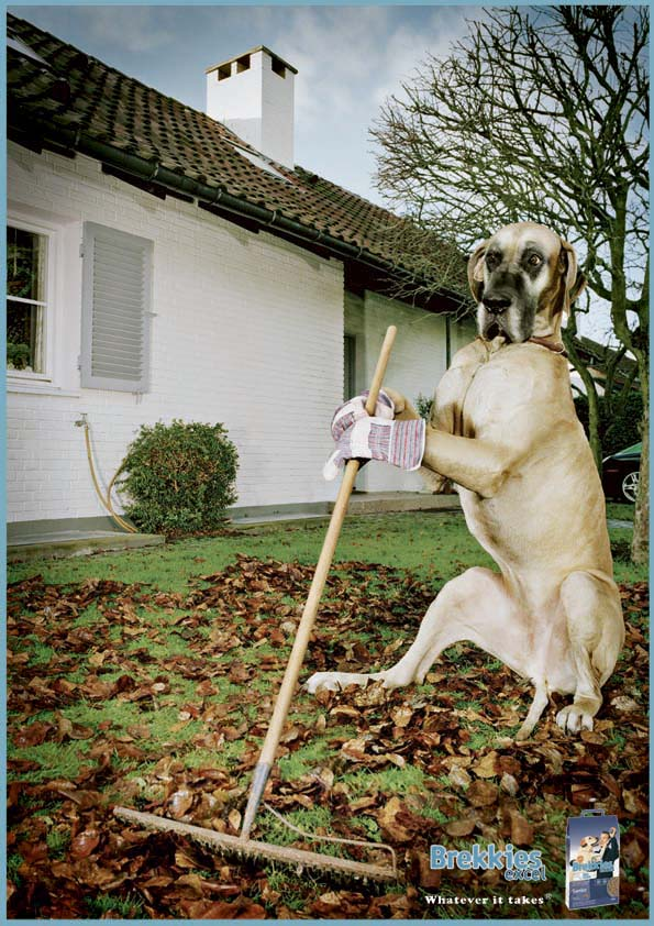 dog with mop ad