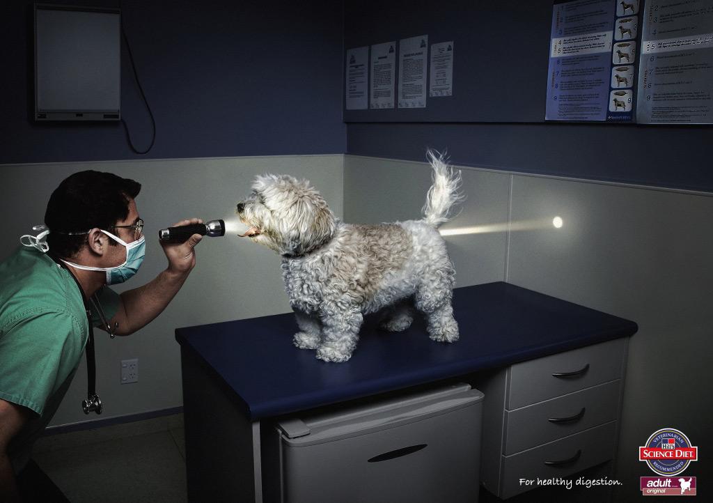 Dog funny ad