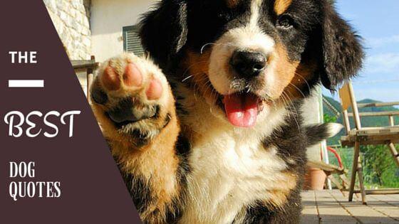 Best Dog Quotes list