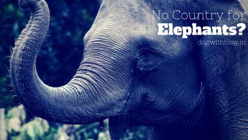 Save elephants blog