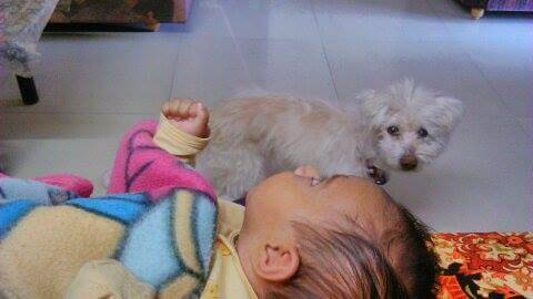 Dog with new born