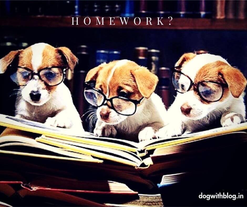 Dog homework funny