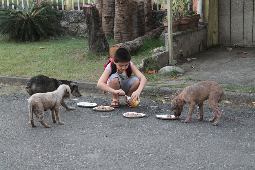 What one man can do? Kid feeding stray dogs