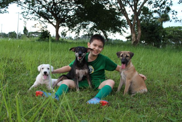 Nine year old Ken with the stray dogs he takes care of