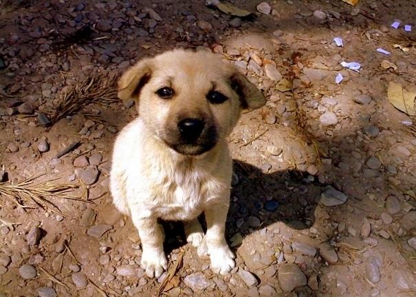 portrait of a dog, a dog's life