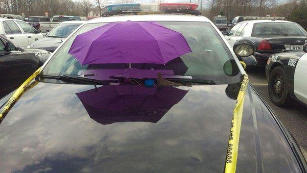 dove nest police car