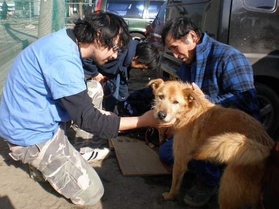 japan earthquake rescued dog with vet