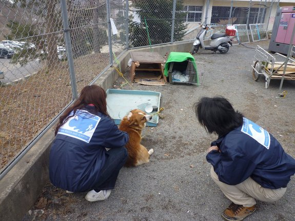 dog rescued in japan after spending 3 days on roof after tsunami