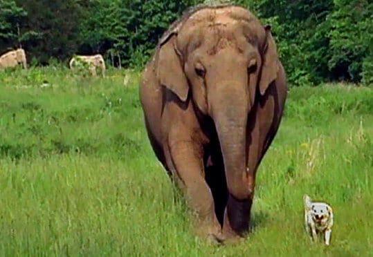 elephant dog best friends