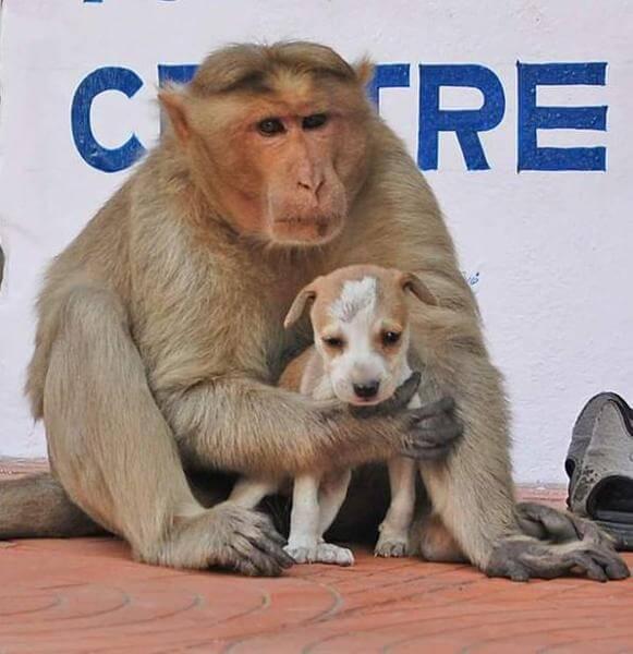 monkey dog India