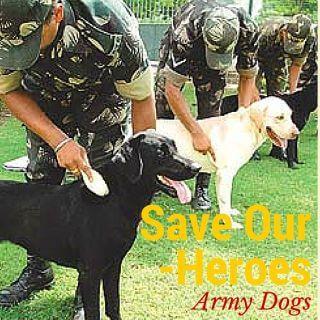 Save India army dog