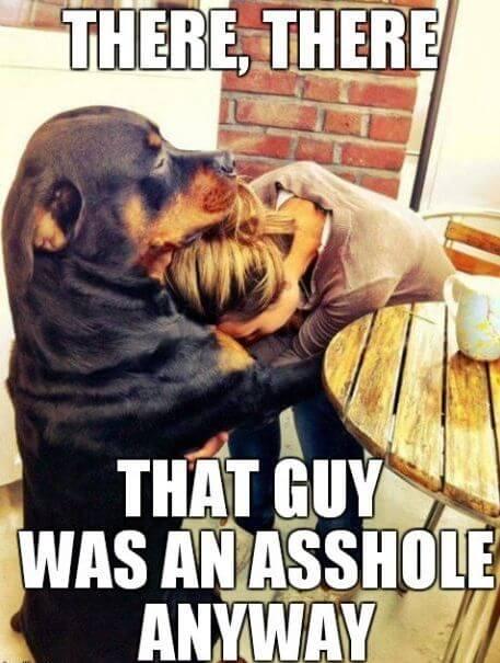dog comforts girl breakup