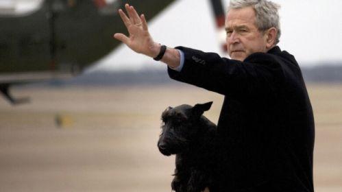 George bush dog