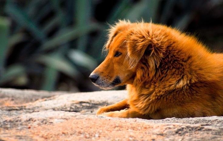 """""""Bangalore stray dog"""""""