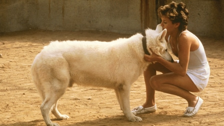 White Dog movie review