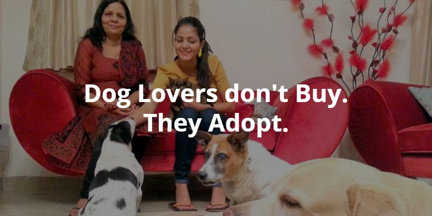 short story from the dog - dog lovers adopt