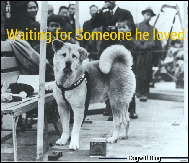 Hachiko waiting at the railway station