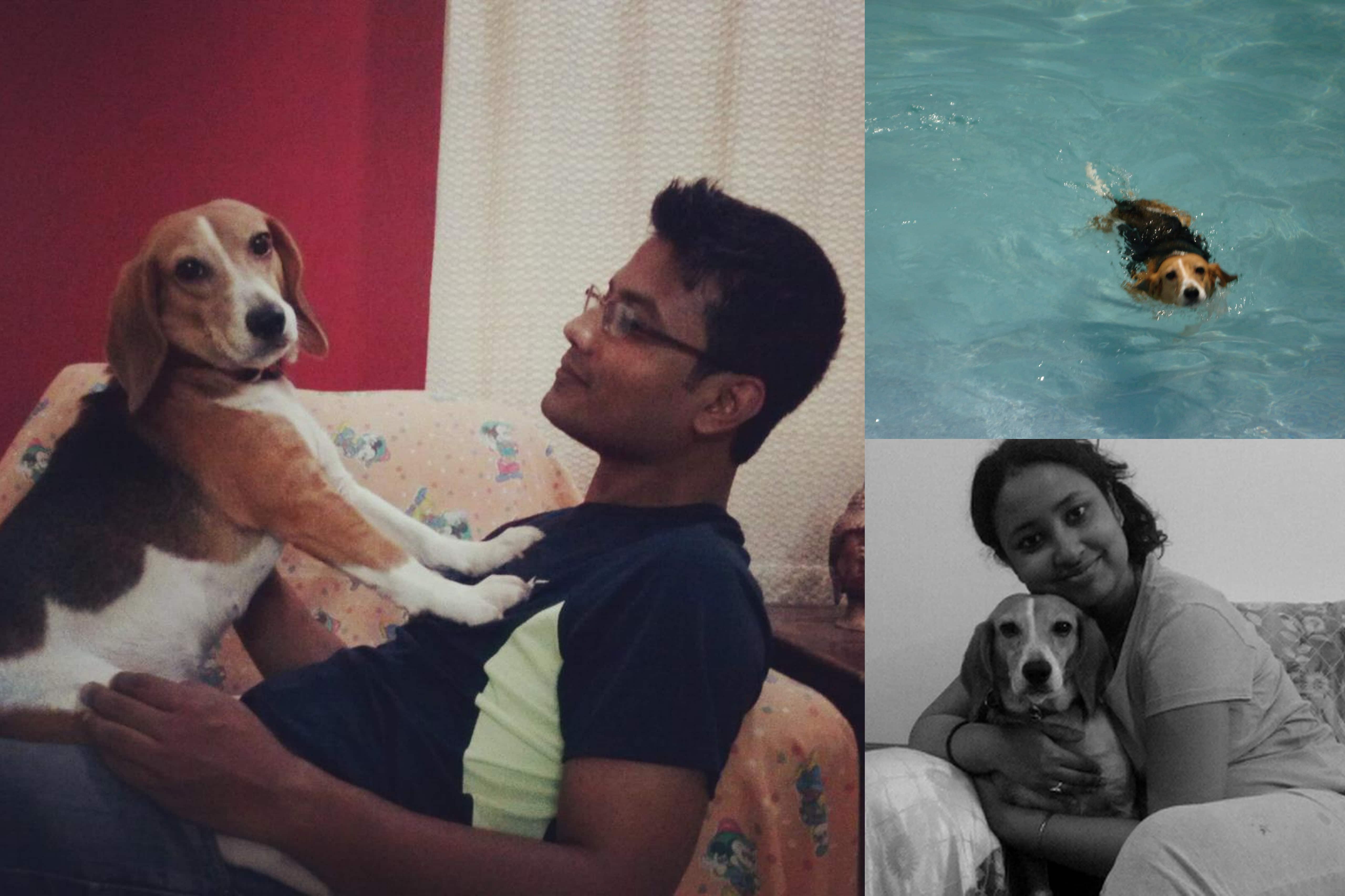 rescued Beagle laboratory