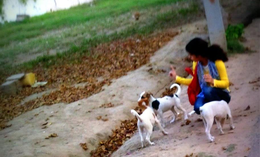 feed stray dogs India