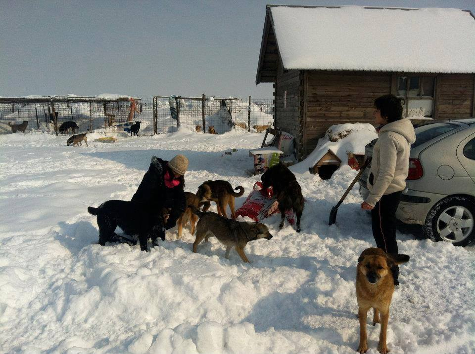 Romanian stray dogs are friendly. Romania, no country for dogs