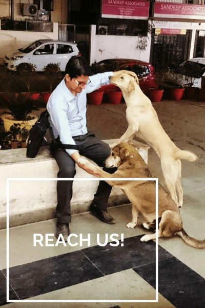 Contact us - dog with blog