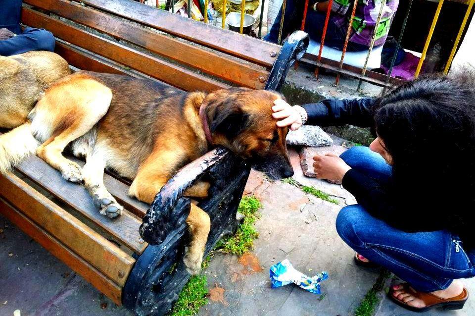 noise poem - dog with blog