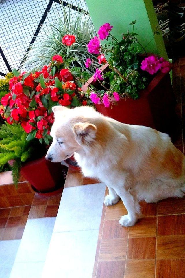 rusty dog with blog, dog who knew no tricks