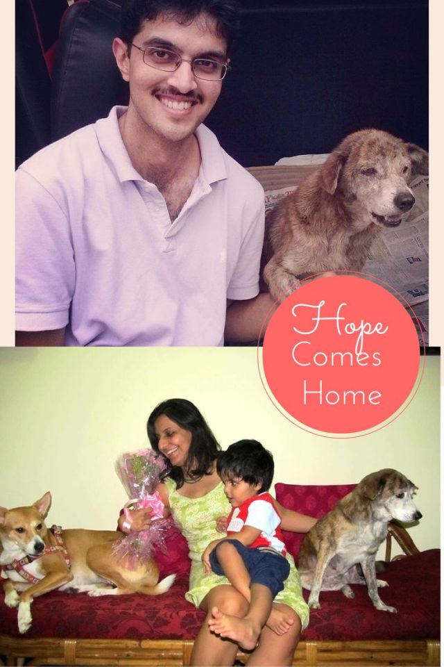 hope - dog with Blog, story of adoption