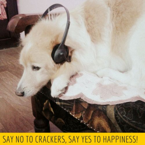 noise pollution free Diwali
