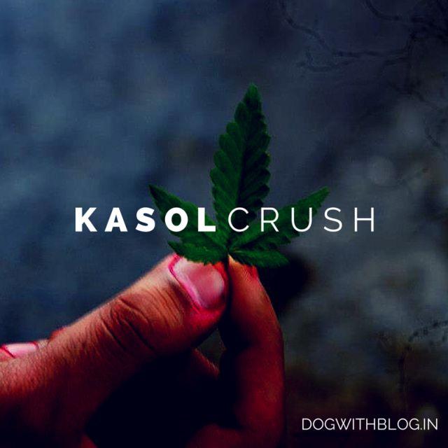 Kasol crush, kasol drugs - dogwithblog