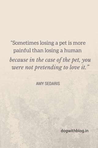 Losing A Pet Awesome Loss Of A Pet Quote
