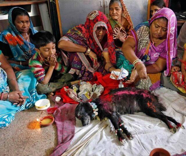 ahmedabad dog burial
