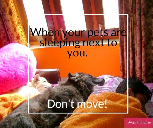Rule When your pets are sleeping next to you