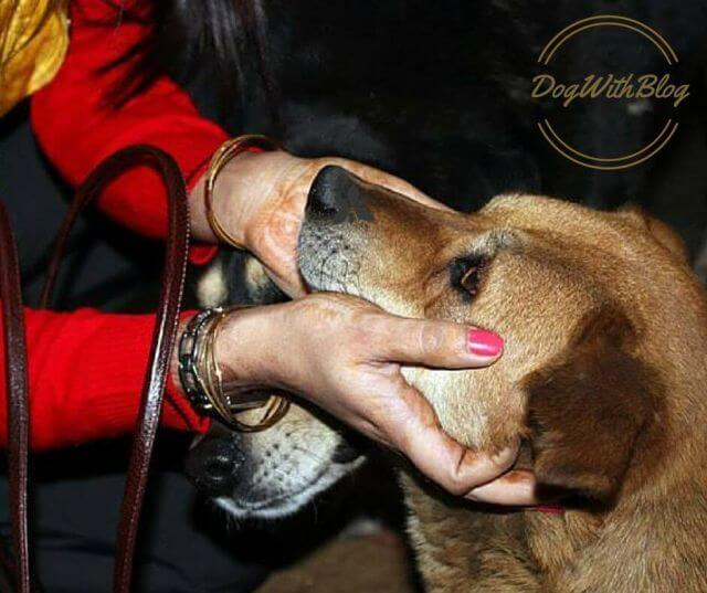 street dog lover, a dog's religion
