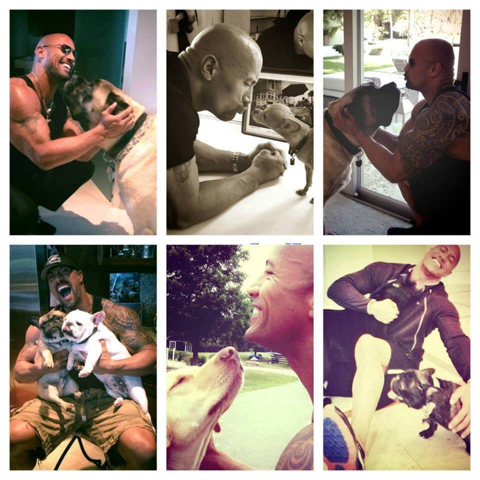 dwayne johnson with dogs, Rock dog lover