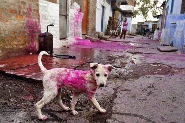Holi stray dogs , How to keep your pets safe in Holi