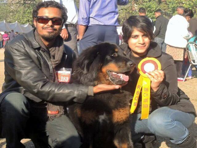 dog show winner bhutia dog