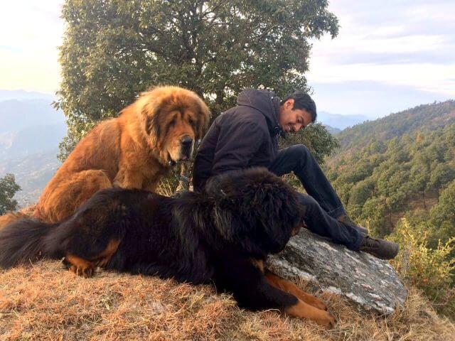 dogwithblog himalayan dogs