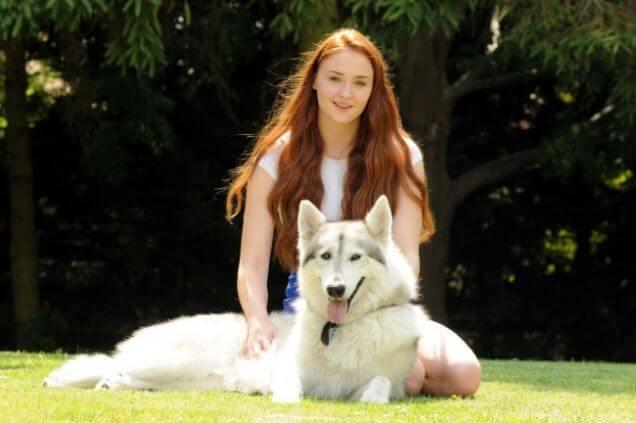 sansa adopts direwolf