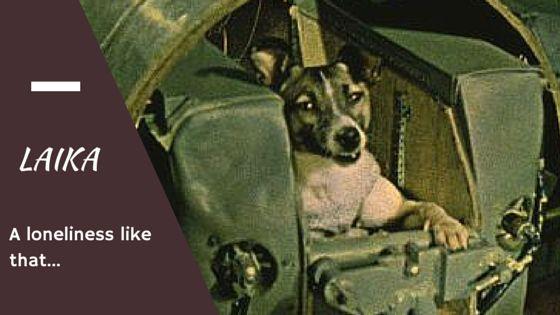 Laika come home