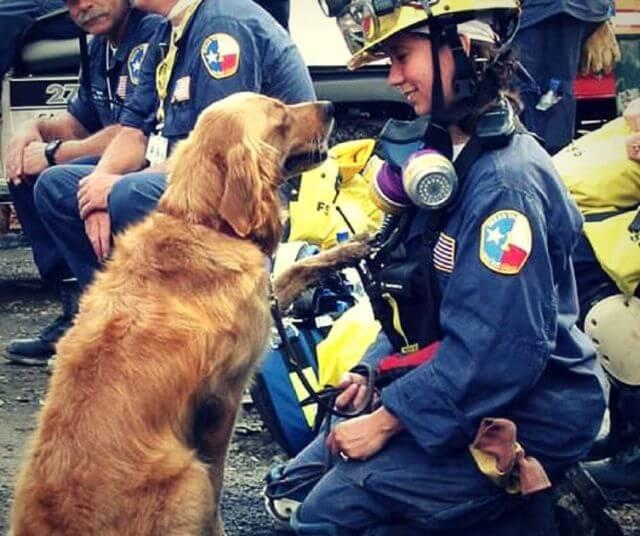 Rescue Dogs 911