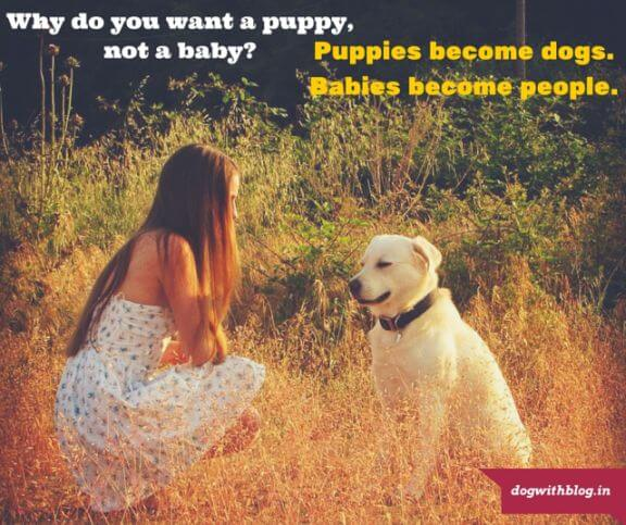 puppies are better than babies