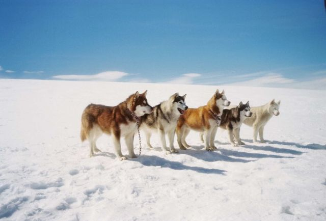 Eight below dogs photo