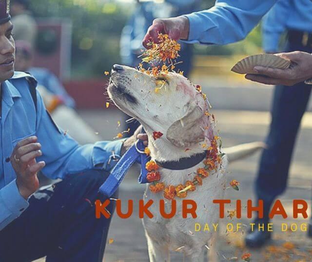 Kukur Tihar - dog festival