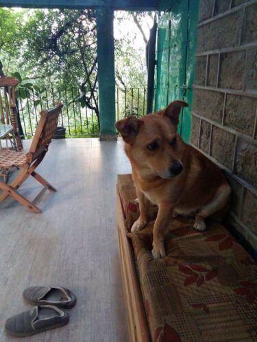 dog happy to hear doorbell