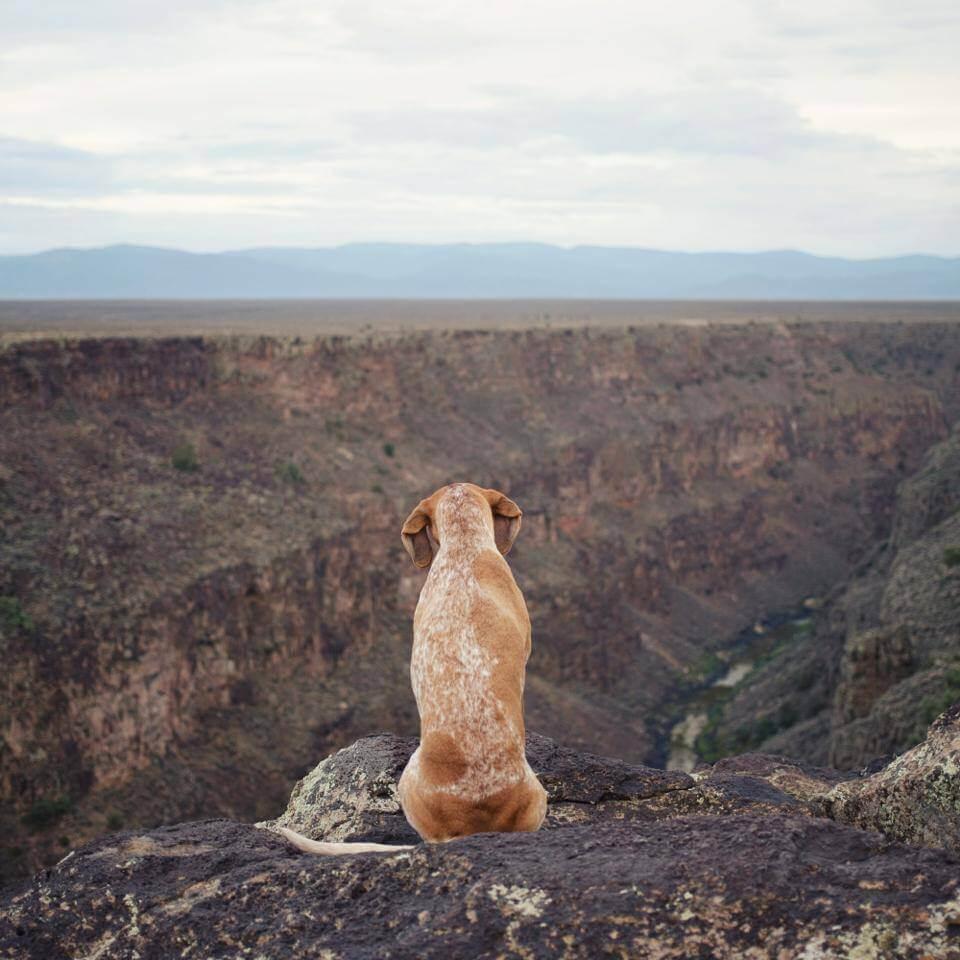 dog awesome photo
