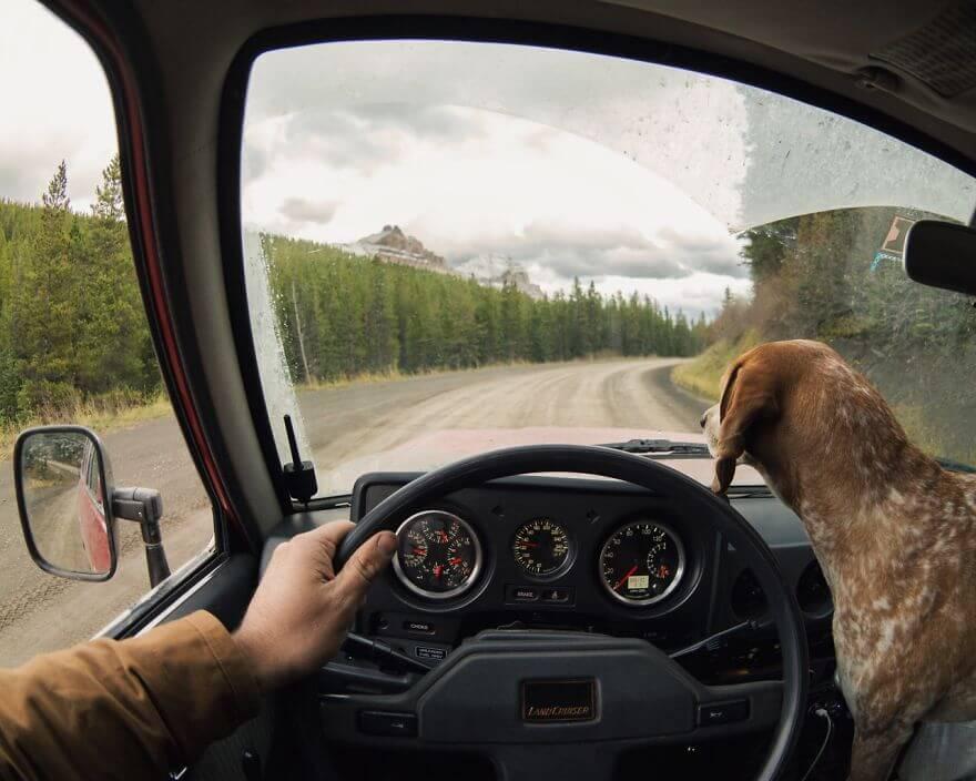 dog car passenger