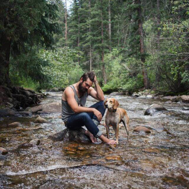 photographs of the dog in wild