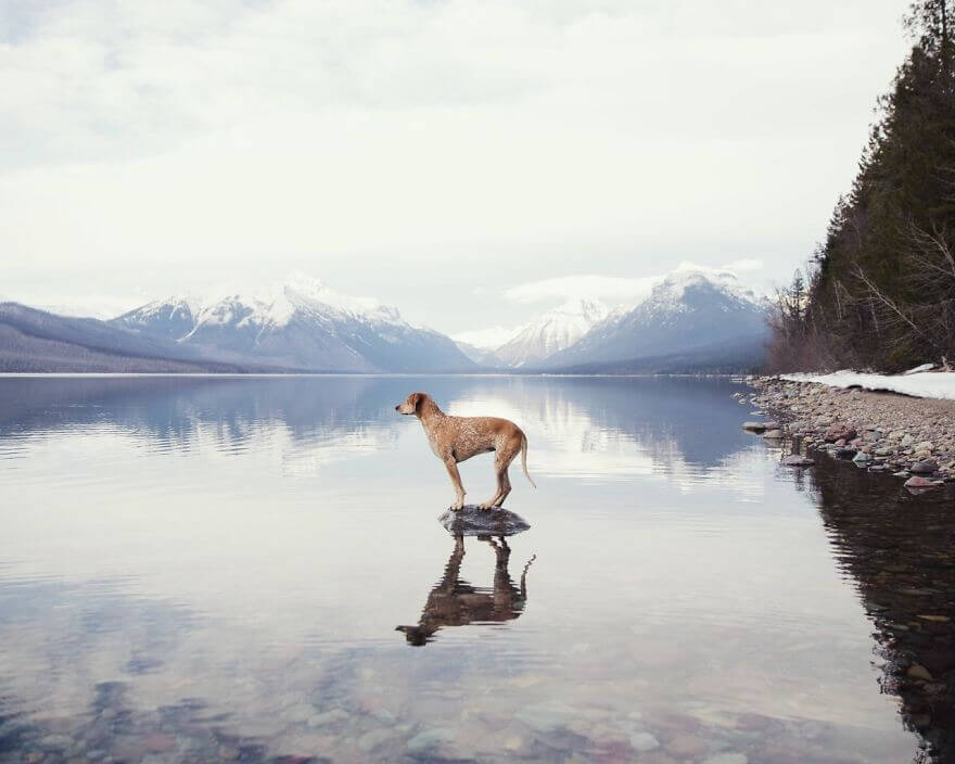 dog snow lake